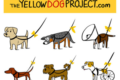 Nie podchodź do psa z żółtą wstążką na smyczy – właściciel i pies sobie tego nie życzy.