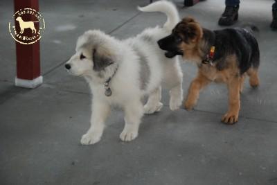 Psy to moja pasja! Mam szczęście.