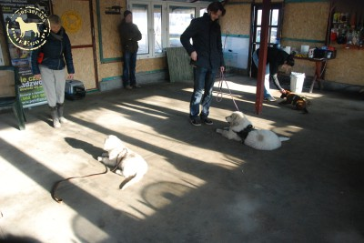 Ostatnie zajęcia psiegoPrzedszkola
