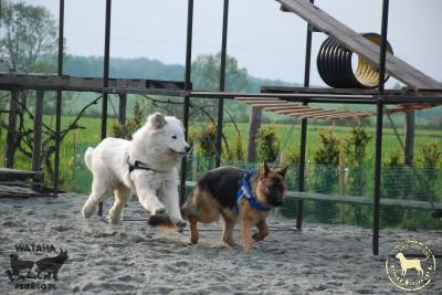 środowe psieBERKOWISKO