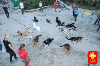 Mikro lokalizacja -SAR DOG Training psieEGO 26.07.17