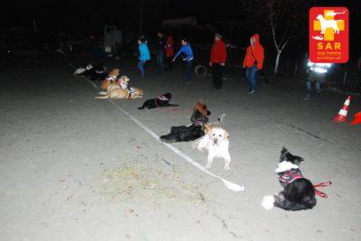 Search and Rescue Dog Training dla początkujących