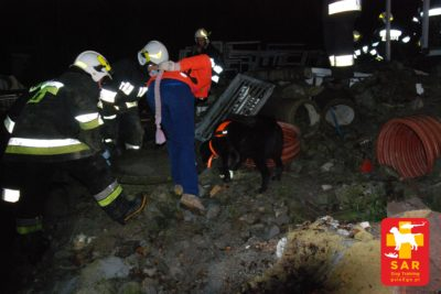 Search and Rescue Dog Training GAZ 20.11.17
