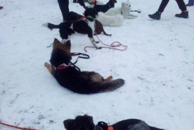 Zima! pierwsze psieBERKOWISKO na śniegu :)