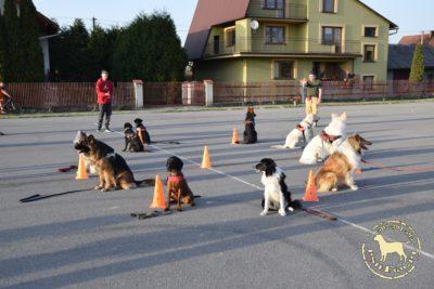 [GTP] Grupowy Trening Posłuszeństwa psieEgo
