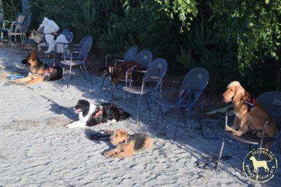 Grupowy Trening Posłuszeństwa psieEgo