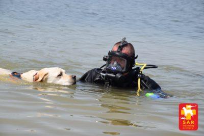 Search & Rescue Dog Training WODA [SAR DT WODA]