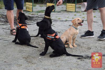 Przedszkolaki – kandydaci na psy ratownicze.