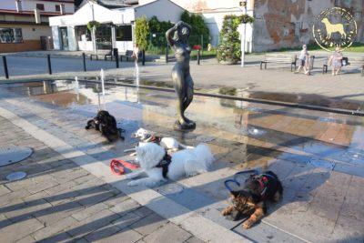 """Grupowy Trening Relacji """"trzech fontann"""""""