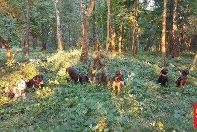 Search and Rescue [SAR] Dog Training NIEWIDOCZNY POZORANT