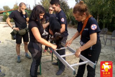 Search and Rescue Dog Training WSPÓŁPRACA