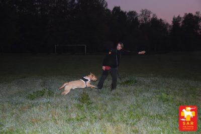 SAR DT sterowanie psem w dystansie