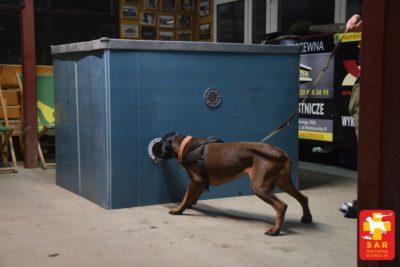 Search and Rescue Dog Training NIEDOSTĘPNY POZORANT