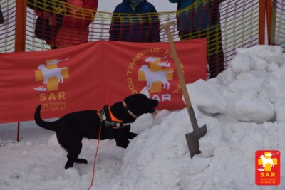Search & Rescue Dog Training WINTER