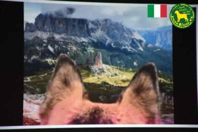 Z psem w Dolomitach.