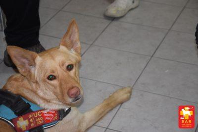 Search and Rescue Dog Training SAMODZIELNOŚĆ i środowisko piwnicy