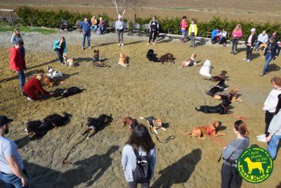 Słoneczne niedzielne popołudnie w psieEgo = psieBERKOWISKO 07.04.19