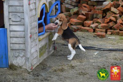 Search and Rescue Dog Training psiePrzedszkole