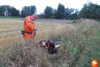 Search and Rescue Dog Training – przestrzeń otwarta