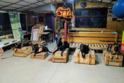 Search and Rescue Dog Training dla Kandydatów na Pozorantów Kynologii Ratowniczej