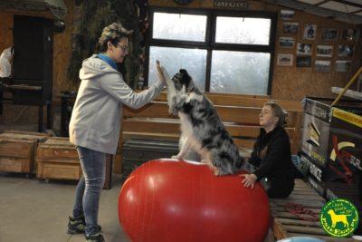 Dog Fitness psieEgo
