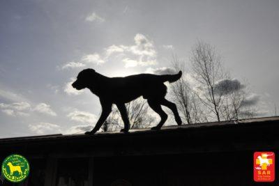 Lekcja na 4 Łapy psieEgo – Resort Czarny Groń
