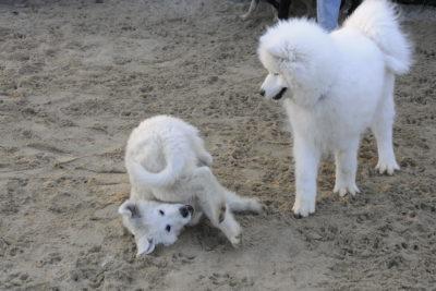 Zapraszamy do psieEgo, każdy znajdzie coś fajnego!