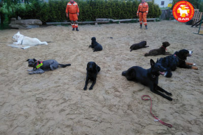 SEARCH and RESCUE Dog Training 10/06.20