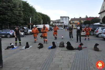 """SAR Dog Training """"MIASTO"""""""