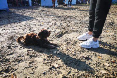 psieBerkowisko dla szczeniaków