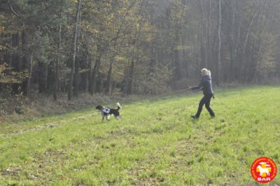 "Search and Rescue Dog Training ""Spadochroniarz""."