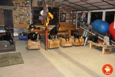 Search and Rescue Dog Training – przestrzeń otwarta w obszarze cieku wodnego.