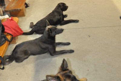 Grupowy Trening Relacji [odłożenie, przywołanie, luźna smycz] psieEgo